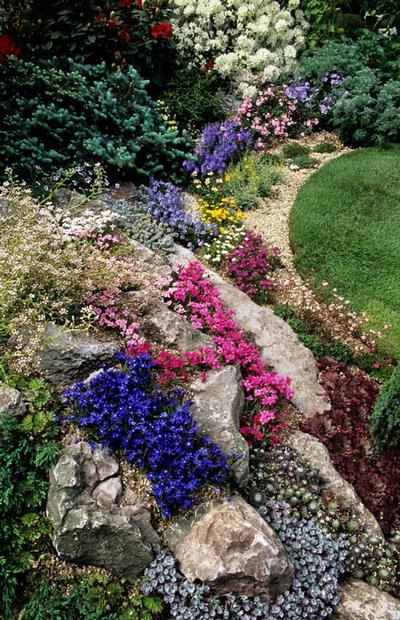 Pin By Naturpur On Awesome Alpines Rock Garden Design Rockery Garden Rock Garden