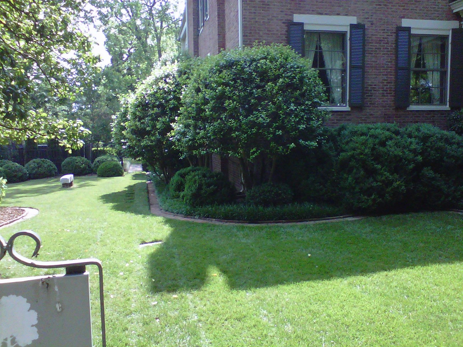 Front Yard Landscaping Chelmsford Ma: Limb Up Evergreen Shrubs For Small Trees