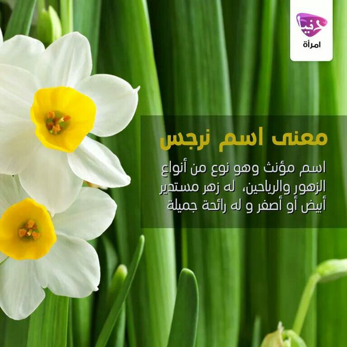 22 تويتر أ د عبد السميع الأنيس Anes Dranis Girl Names Names Vegetables