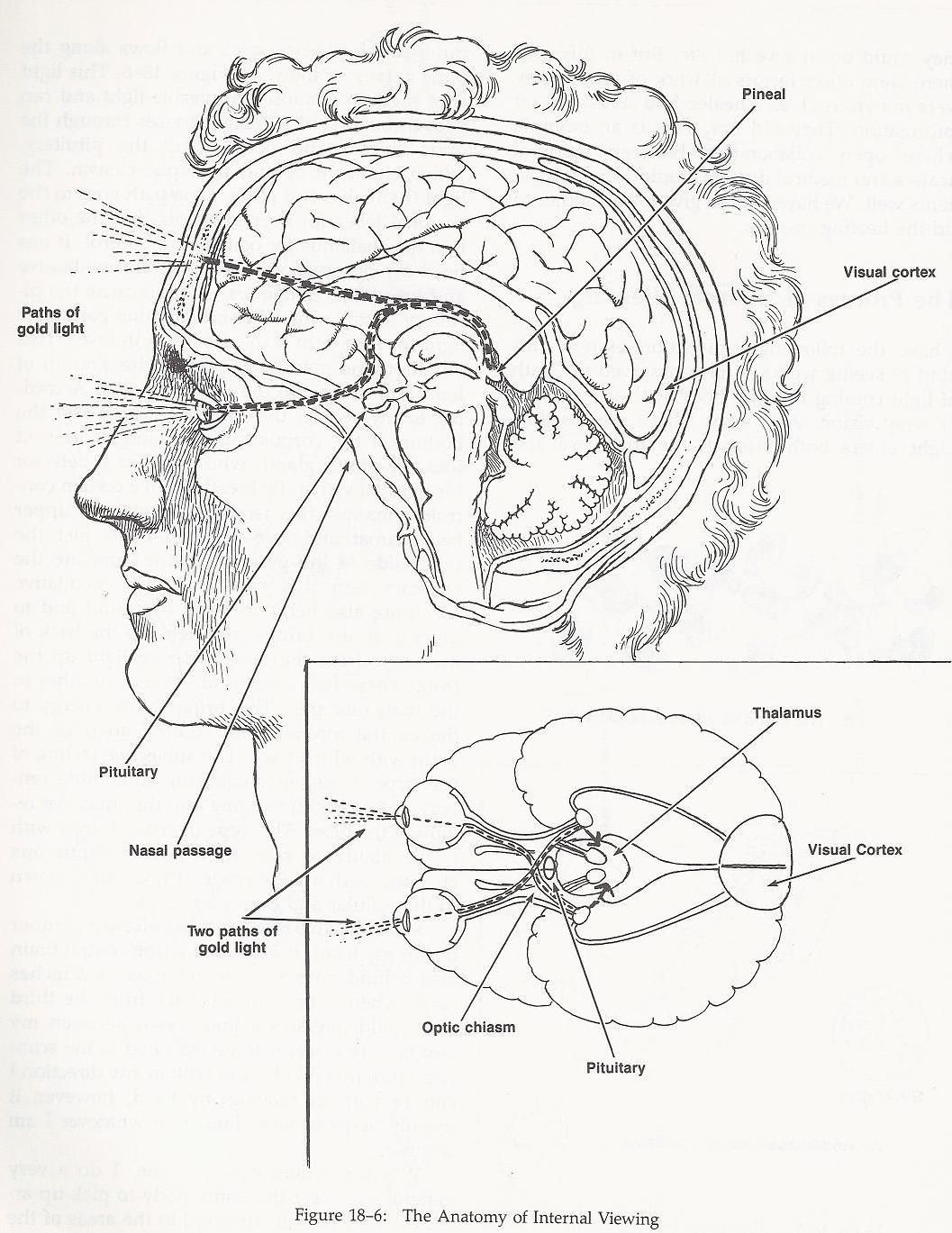 The pineal gland is your personal captains chair to your space ship ...