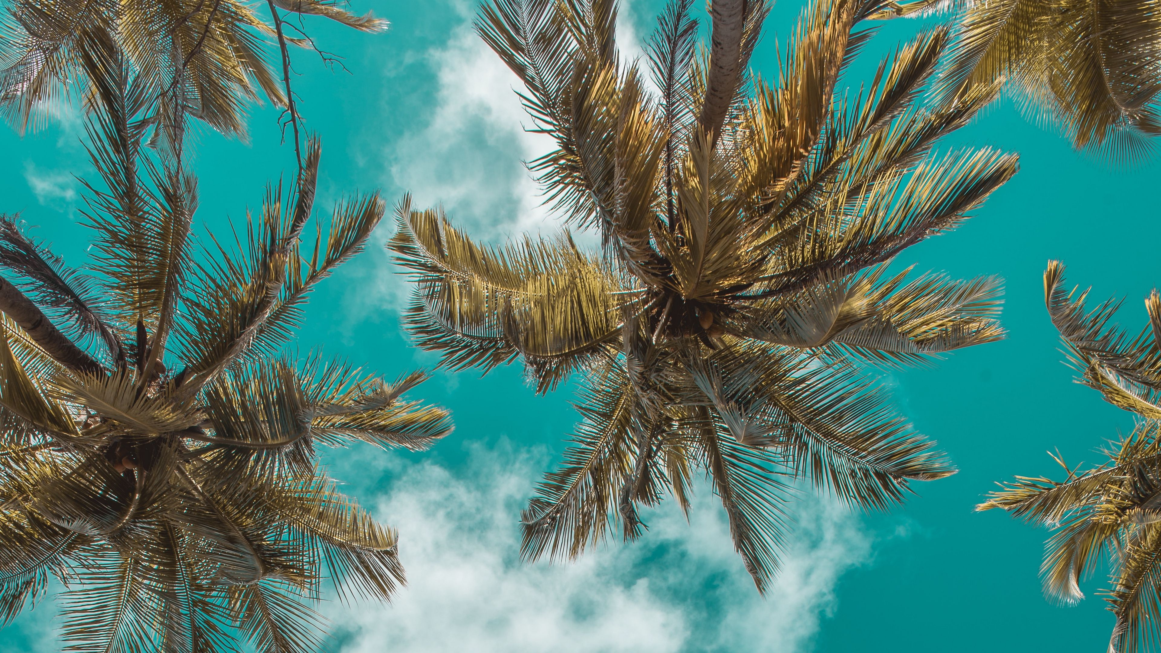 Palm Trees Bottom View Clouds Sky Branches Tropics Leaves 4k Palm Trees Clouds Bottom View Clouds Sky Palm Trees