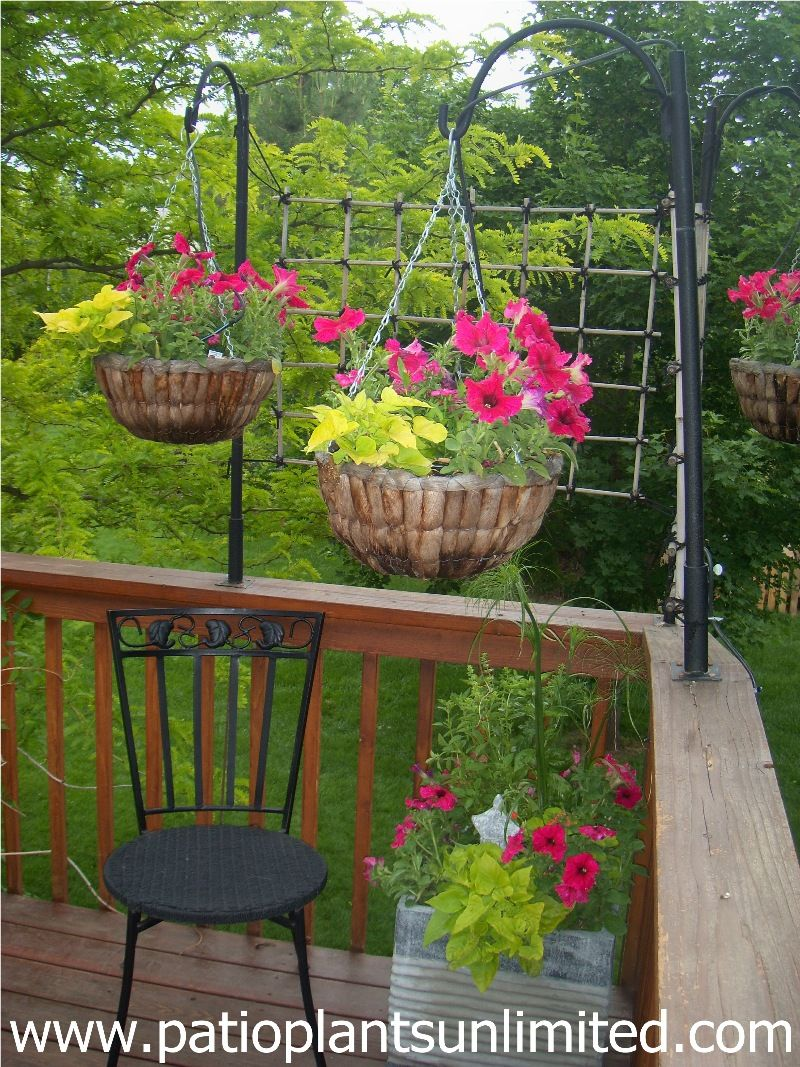 Container Gardens: Hanging Baskets and a unique bamboo screen ...