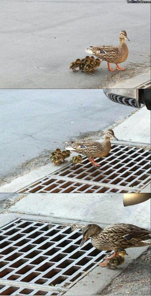 The moment you realize the baby ducks fell through the vent...