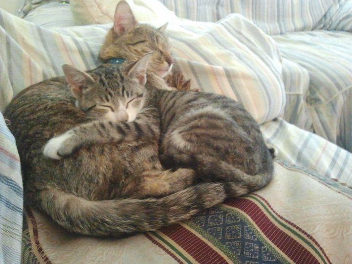 Minua kaksi kissaa~