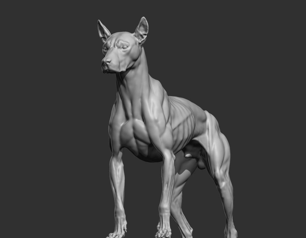 Canine Study Steve Lord On Artstation At Httpsartstation