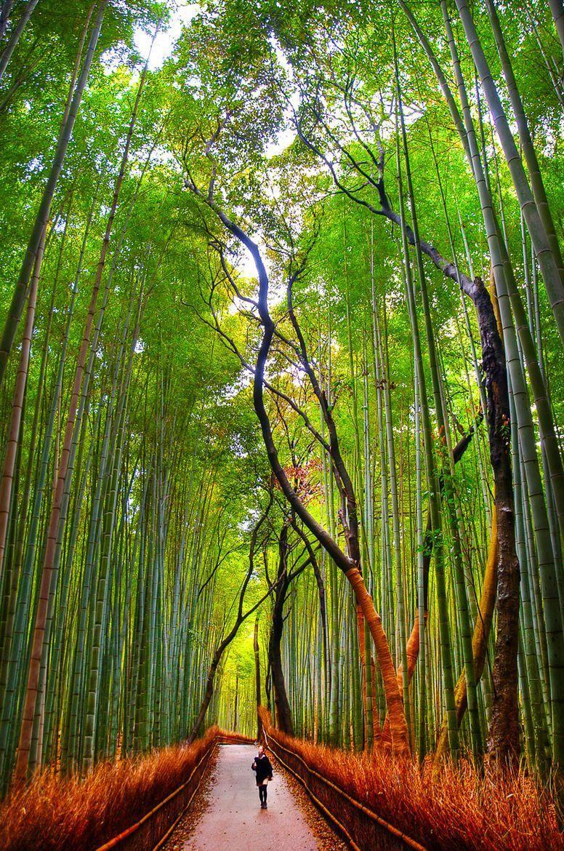 Travel To Japan Blog #TravelJapanMoney  #---japantravel---