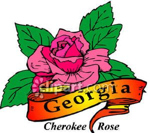 ga state flower | State Flower of Georgia, the Cherokee Rose ...