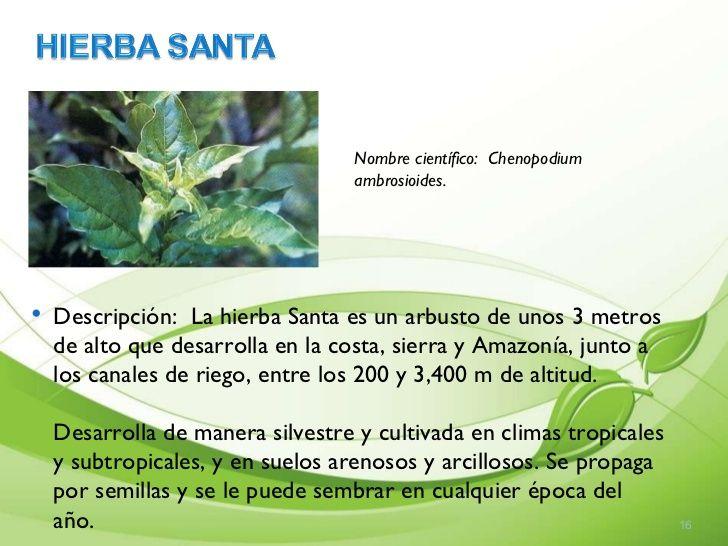 Imagen Relacionada Imagenes De Plantas Plantas Plantas Medicinales