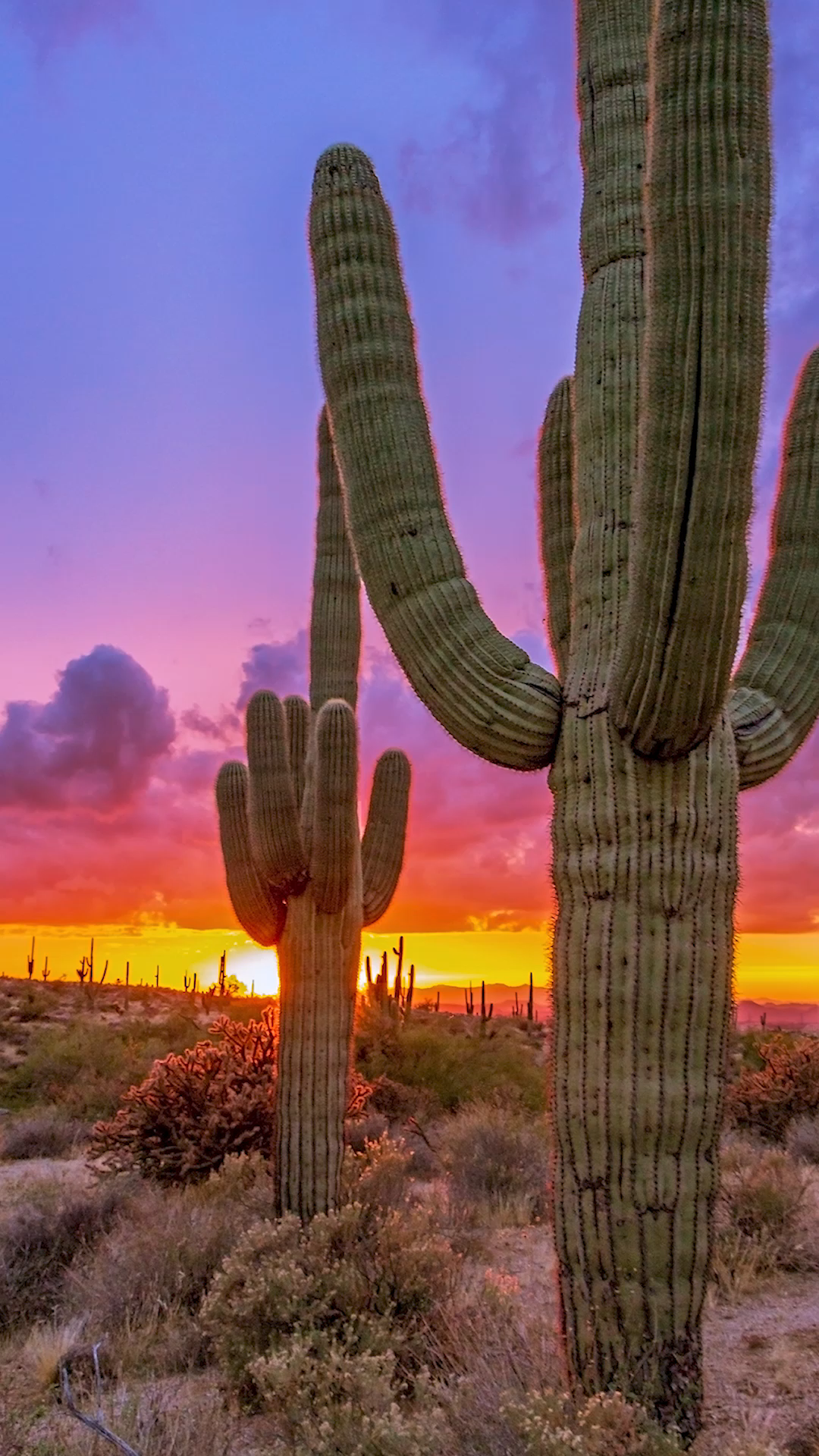 Vibrant Arizona Sunrises & Sunsets