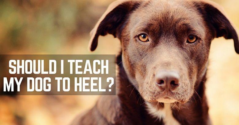 Teach A Dog To Heel And Make Walks More Fun Teach A Dog To Heel