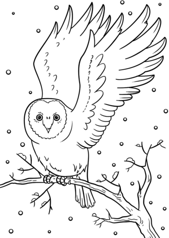 Click To See Printable Version Of Winter Owl Coloring Page Owl Coloring Pages Coloring Pages Winter Bird Coloring Pages