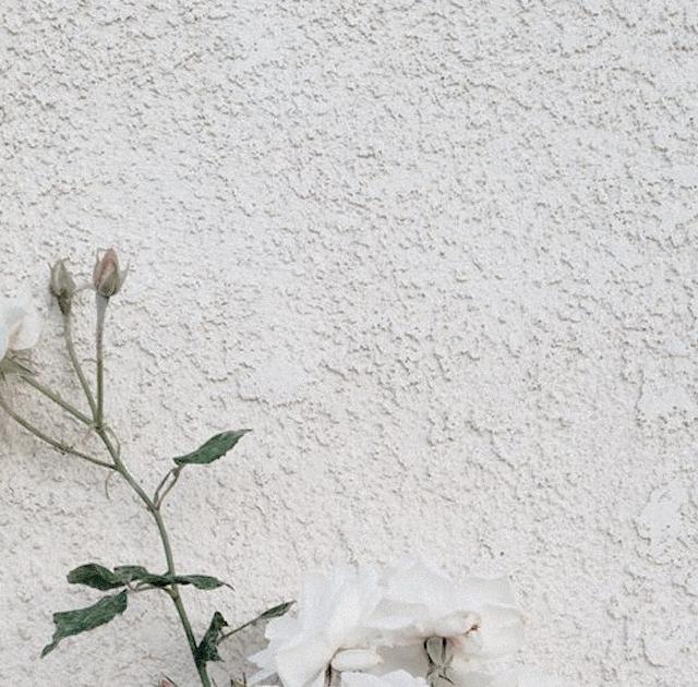 Wallpaper Bunga Layu Tumblr Mawar Layu Hd