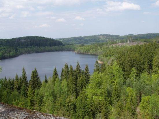 Swedish Forest - Bosque en Suecia