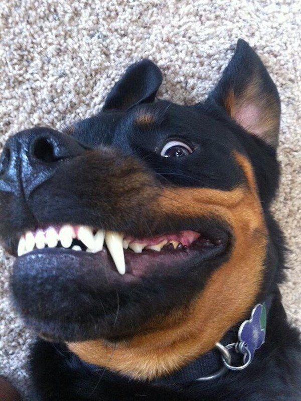 Puppies Make Me Happy 65 Cute Photo Jaja Funny