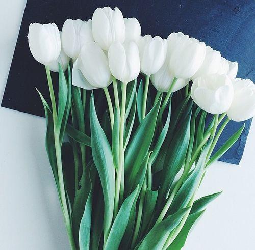Pinterest Alainasimss Tout En Blanc Pinterest Tulipes