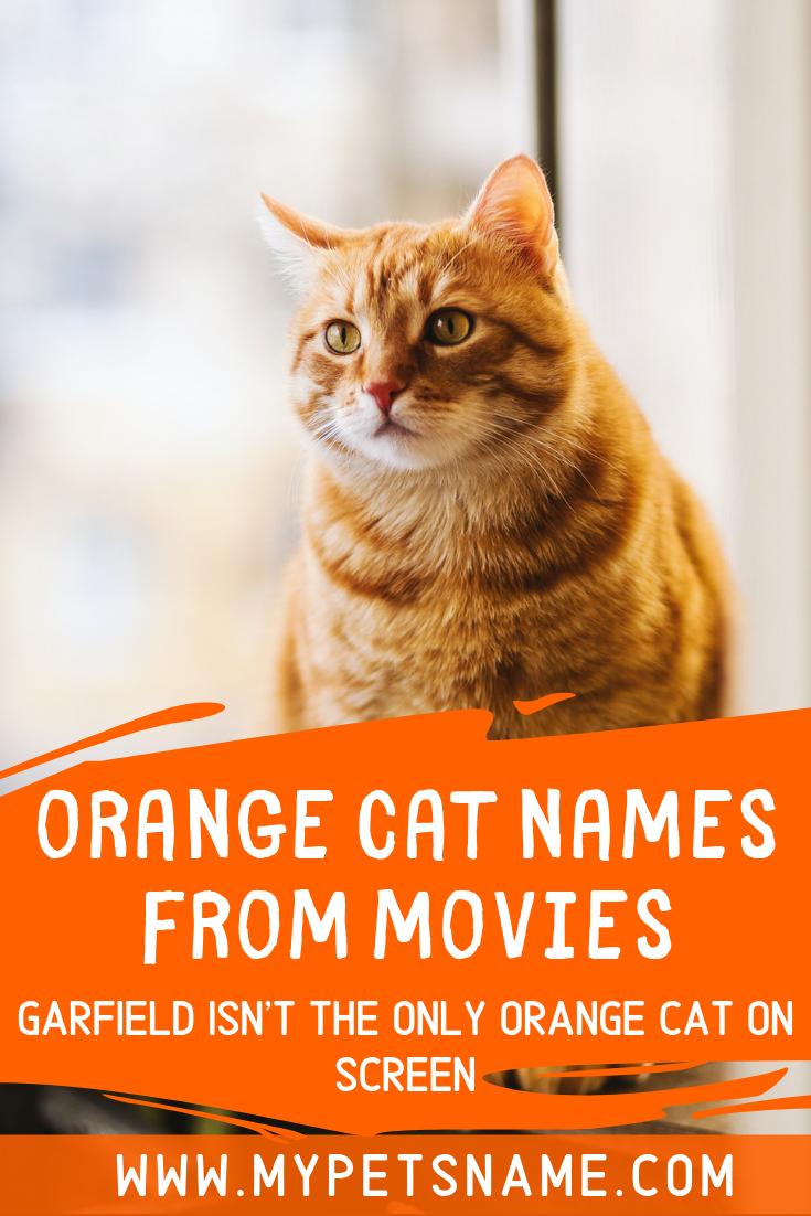 Orange Cat Names From Movies Cat Names Orange Cat Cats