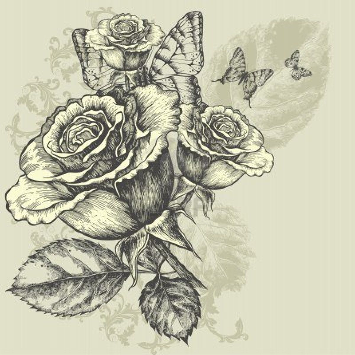 Drawings Of Roses And Butterflies | Drawings Of Roses And ...