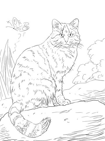 European Wild Cat Coloring online page This page .lets you