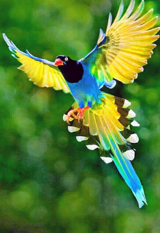 What a beautiful bird, nature never let's me down it is so wonderful | Birds | Beautiful birds ...