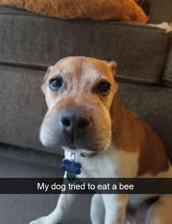 Image of: Pics Funny Pictures Of Today Funny Memes Of Today Funny Texts Of Today Funny Quotes Of Today Tag funny funnymemes funnydogs funnypic funnypictures Pinterest Funny Pictures Of Today Funniest Funny Animals Funny Dogs Funny