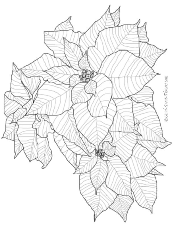 Realistic Flower Coloring Pages