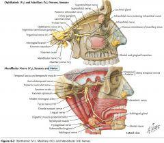 Image result for trigeminal nerve innervation medicine image result for trigeminal nerve innervation fandeluxe Gallery