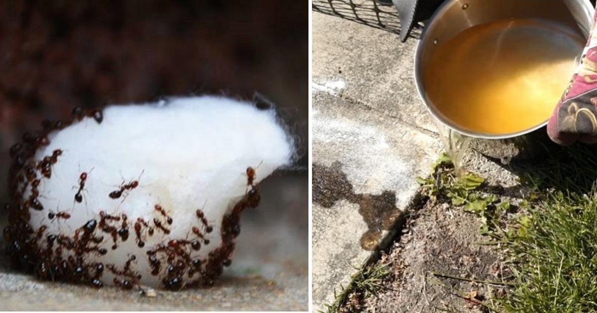 chassez les fourmis de la maison une fois pour toutes sans insecticide trucs et astuces. Black Bedroom Furniture Sets. Home Design Ideas