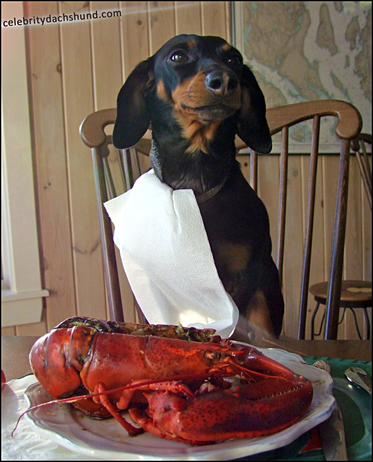Now This Is A Dinner X Wiener Dog Dog Vacations Dachshund