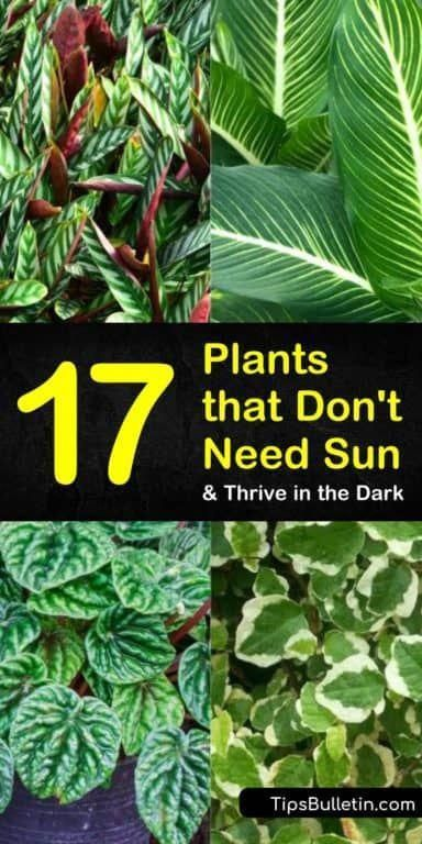 Discover the best plants that don't need sun for indoor ...