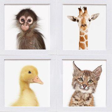 Sharon Montrose: baby animal studies