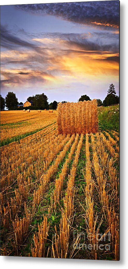 Golden Sunset Over Farm Field In Ontario Metal Print By Elena Elisseeva All Metal Prints Are Professionally Printed Packaged Country Scenes Landscape Photo