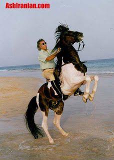داریوش بزرگ Places To Visit Horses Places