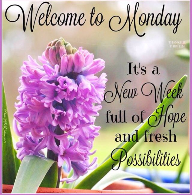 Welcome Monday
