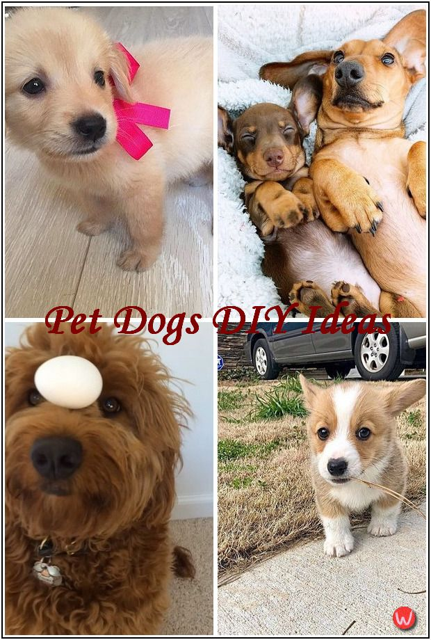 Pin On Pet Dogs Diy Ideas