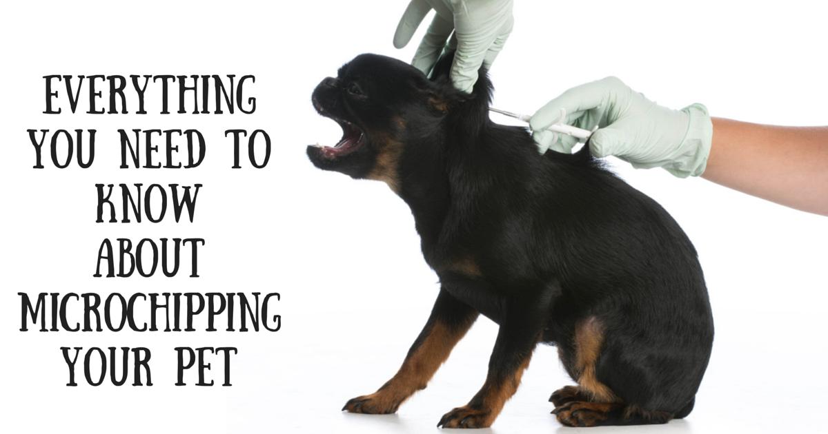 Redbarn microchipping pets blog