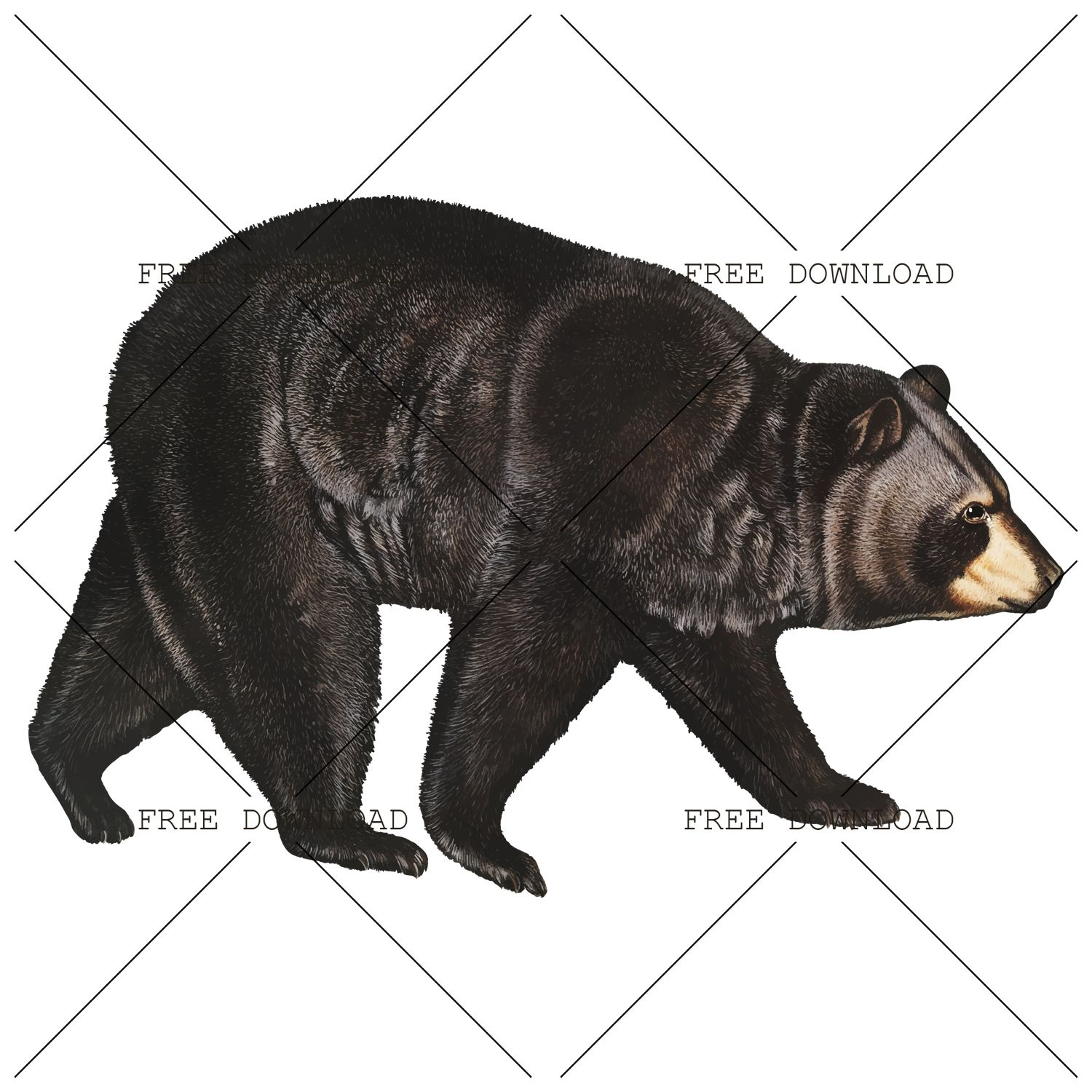 Bear Png Image With Transparent Background Png Images Transparent Background Stock Images Free
