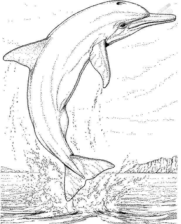 Tiere Delphin Delphin Malvorlage Malvorlagen Ausmalbilder Ausmalbilder Zum Ausdrucken