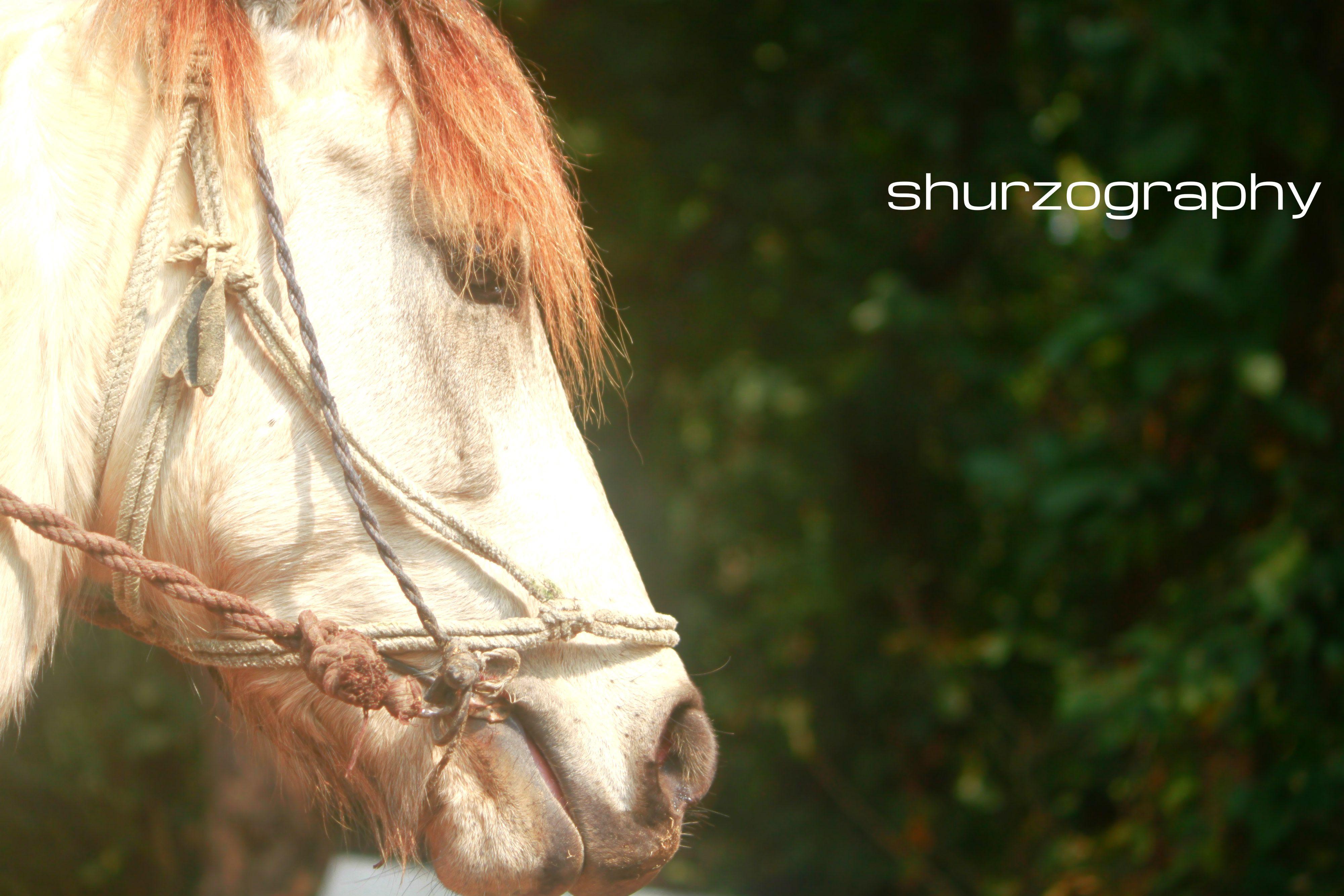 Horse in Bangladesh (National Park)