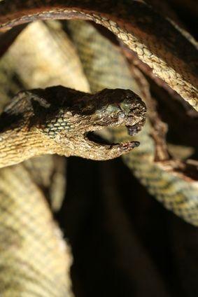 Cómo usar veneno para librarse de las serpientes | eHow en Español