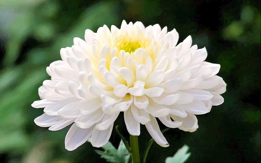 Artificial white chrysanthemum flowers   Chrysanthemum Flower     Artificial white chrysanthemum flowers