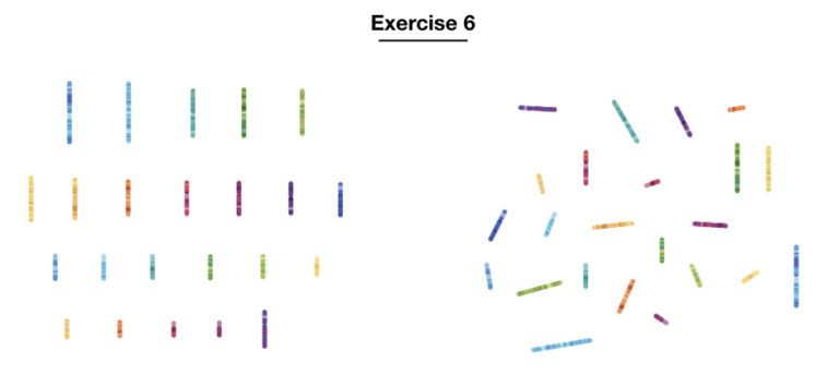 10 Best Karyotyping Activities And Assignments Karyotypinghub Assignments Activities Human Genome