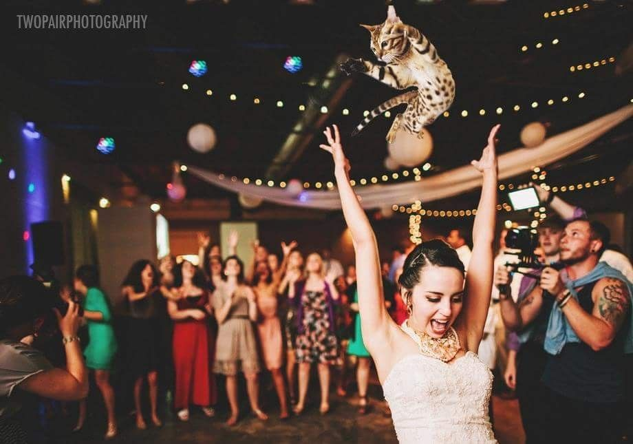 Discover Ideas About Funny Cat Photos Wedding Pictures Brides Throwing School
