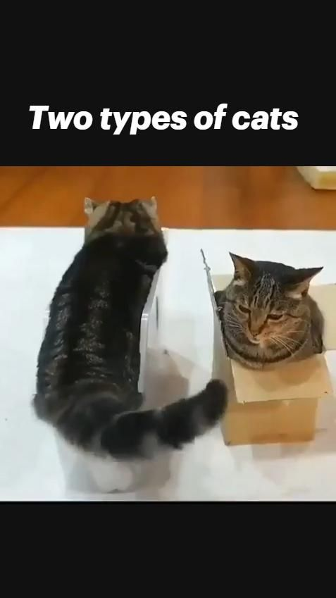 Two types of cats