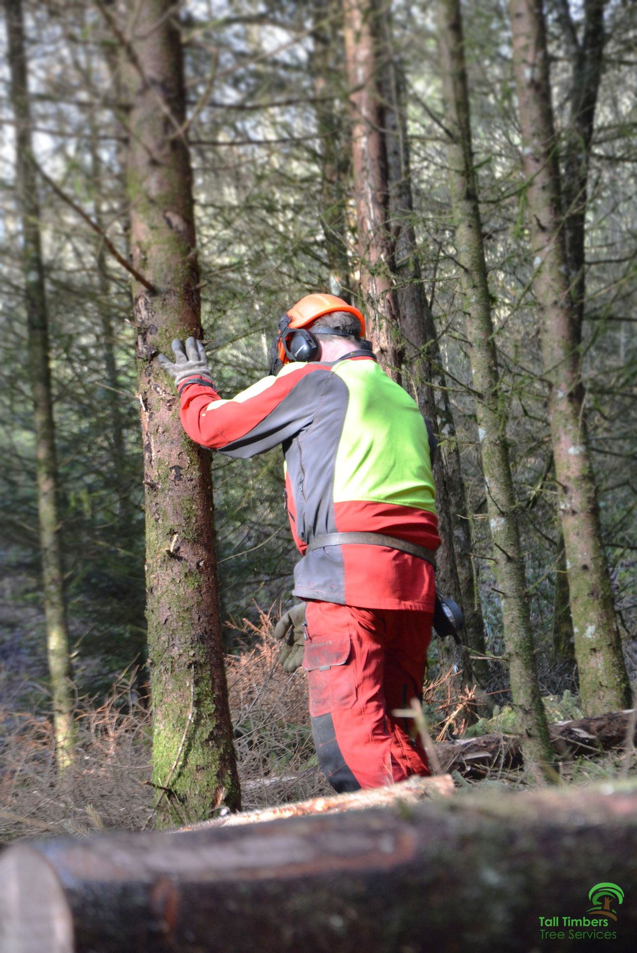 With A Vast Number Of Tree Care Companies And Tree Surgeons In Sydney It Can Become Very Confusing And Hard To Know Who To Tree Service Tree Surgeons Tree Care