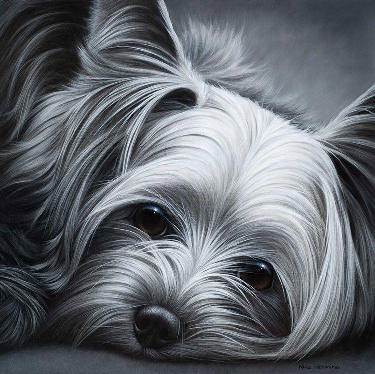 Nigel Hemmimng Yorkshire Terrier Yorkie Dogs Yorkshire