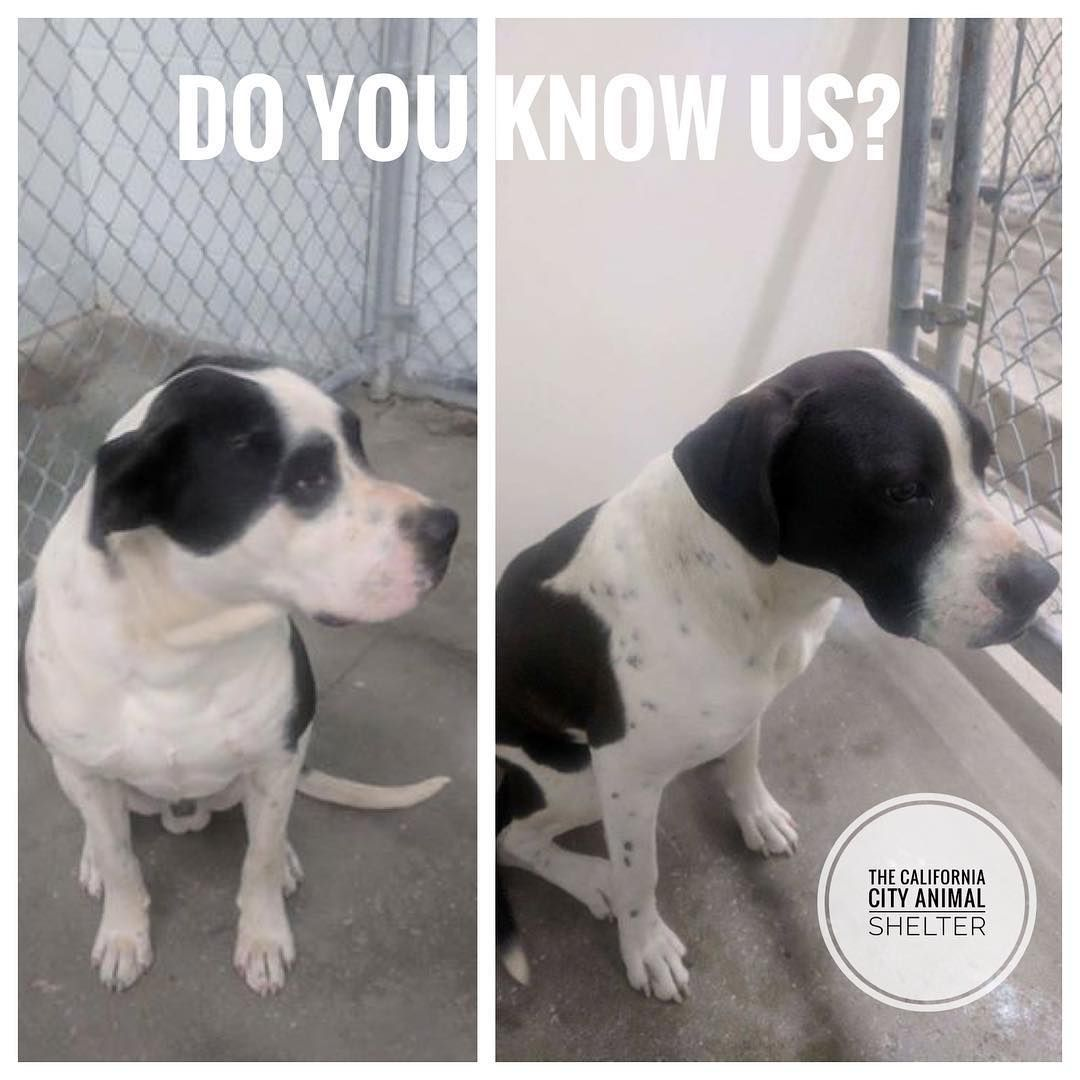California City Animal Shelter On Instagram Do You Know Us These 2 Dogs Were Brought To The California City Animal Shel Animal Shelter California City Dogs