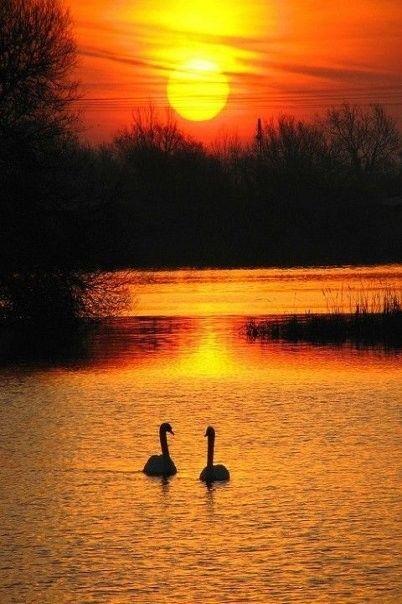 Вечернее умиротворение | Природа | Puestas de sol, Sol и ...