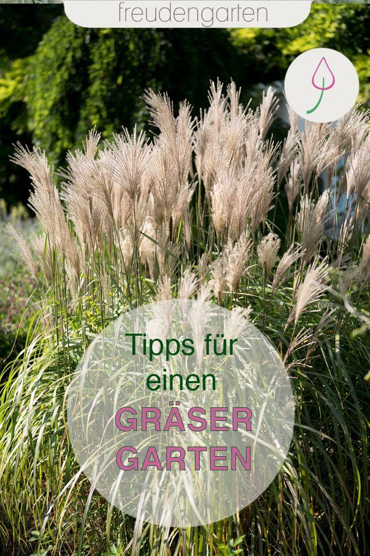 Ziergräser für den Garten