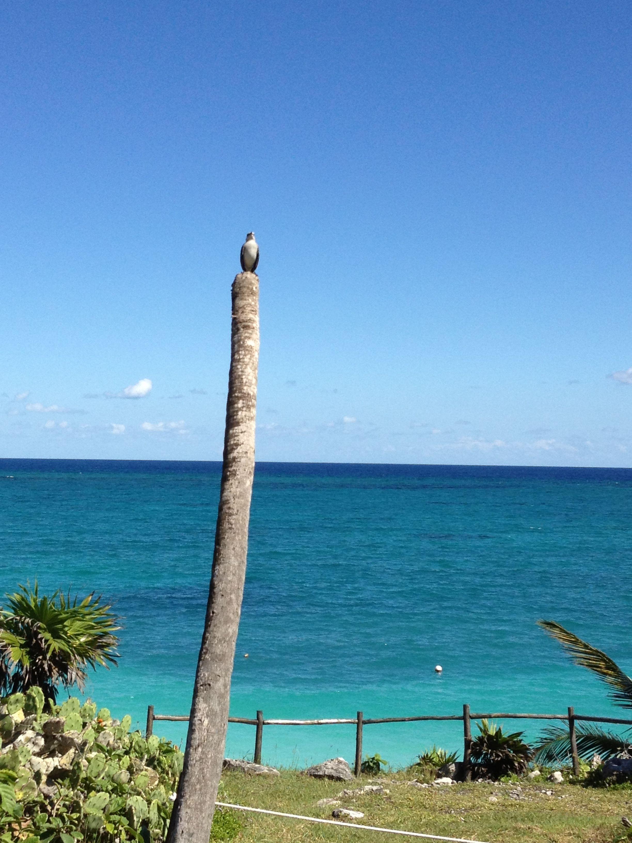 9500 Miramar Rd: Tulum, #QuintanaRoo, #Mexico.