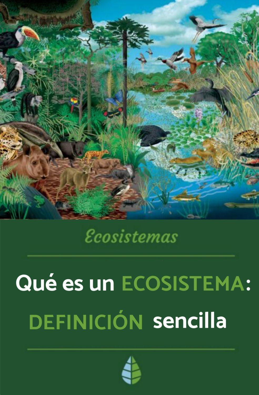 Qué Es Un Ecosistema Para Niños Definición Funcionamiento Tipos Y Más Tipos De Ecosistemas Maquetas De Ecosistemas Ecosistemas